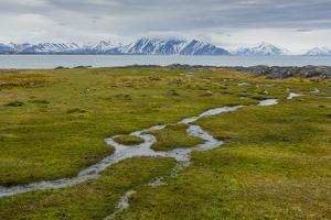 Norway. Svalbard. Camp Millar. Streams of Water Flow over the Moss by Inger Hogstrom