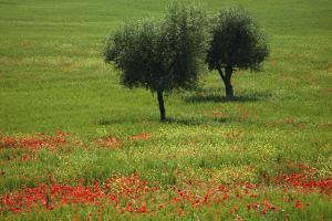 Tuscany 2008 by Ingmar Wesemann