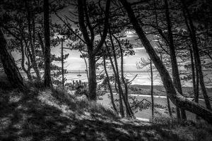 The Netherlands, Frisia, Terschelling, Dunes, Pine, Pinewood by Ingo Boelter