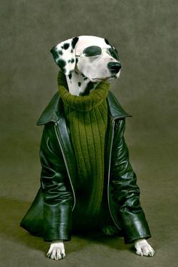 Dalmatian by ingret