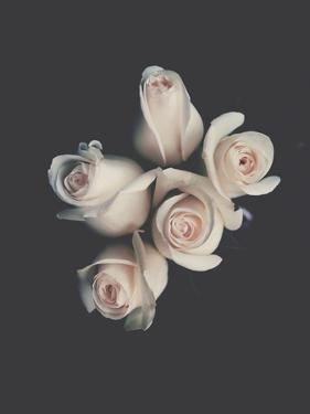 Roses by Ingrid Beddoes