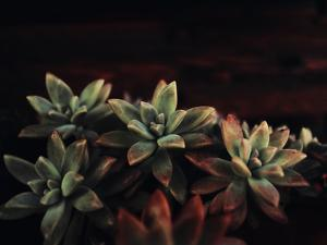 Succulent by Ingrid Beddoes