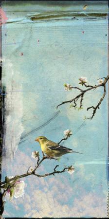 Bird Window II by Ingrid Blixt