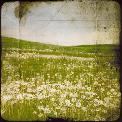 Field I by Ingrid Blixt