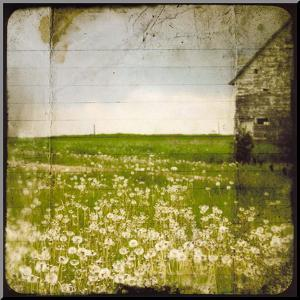 Field II by Ingrid Blixt