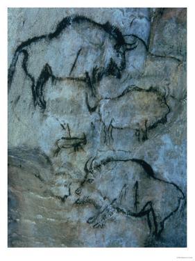 Injured Bison, Rock Painting, Prehistoric