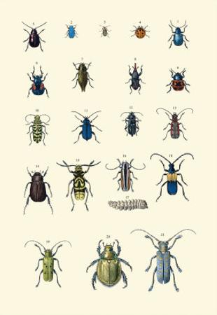 Insect Study