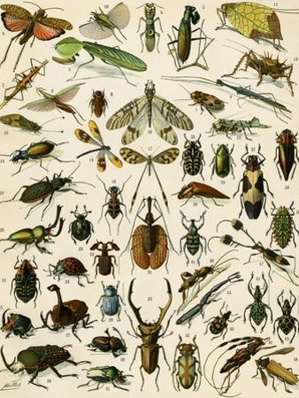 Insects, Including Beetles
