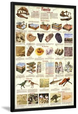 Introduction to Fossils Paleontology Educational Science Chart Poster