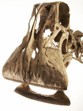 A cast of a Nigersaurus dinosaur by Ira Block