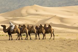Bactrian Camels in the Khongoryn Els Sand Dunes in Gobi Gurvansaikhan National Park by Ira Block