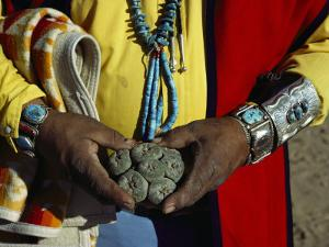 Close View of Peyote Cacti (Lophophorus Williamsii) Being Held by a Native American Medicine Man by Ira Block