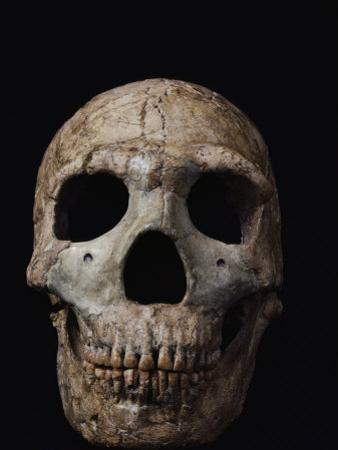 This Neandertal Skull from Wadi Amud is About 60,000 Years Old