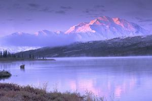A Moose, Alces Alces, Wading in Wonder Lake as Sunrise Alpenglow Falls on Mount Mc Kinley by Ira Meyer