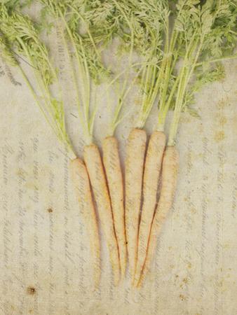 Herb Still Life III by Irena Orlov