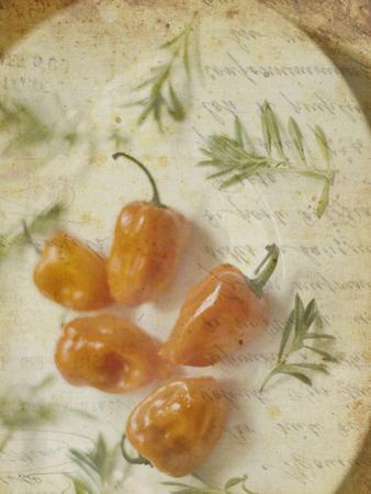 Herb Still Life VI by Irena Orlov