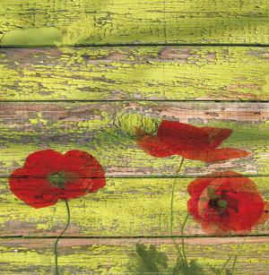 Red Poppies II by Irena Orlov