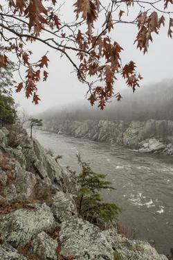 A Foggy Morning at Mather Gorge in Autumn by Irene Owsley