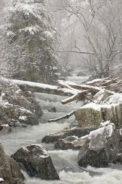 A Side Channel of the Potomac River Rushing Through a Snowy Landscape by Irene Owsley