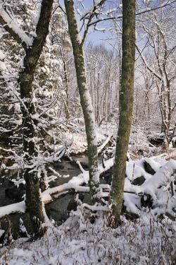 A Snowy Forest Scenic with a Stream on Olmstead Island, Near Great Falls by Irene Owsley