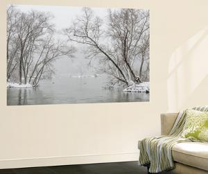 A Snowy Potomac River Scenic with Ducks and Geese by Irene Owsley