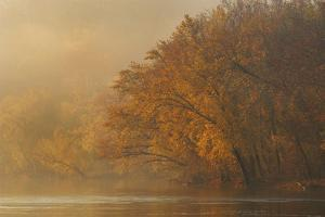 Autumn Along the Potomac River Near Angler'S by Irene Owsley