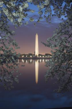 Cherry Blossoms Framing the Washington Monument and the Tidal Basin at Twilight by Irene Owsley