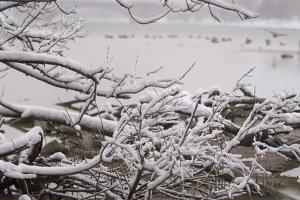 Close Up of Snow-Covered Tree Branches Along the Potomac River by Irene Owsley