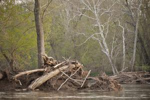 Debris from the Spring Floods on the Potomac River by Irene Owsley