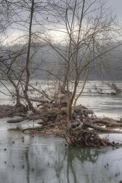 Flood Debris in the Potomac River Inside the Beltway by Irene Owsley