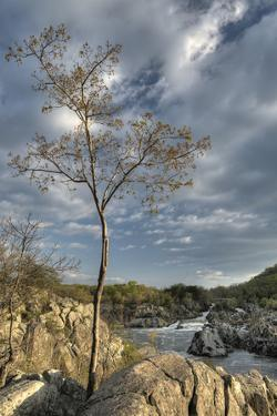 Looking North Towards Fish Ladder on the Potomac River from the Virginia Side by Irene Owsley