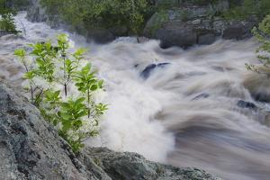 Potomac River in Spring Flood by Irene Owsley