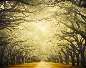 Avenue Shade I by Irene Suchocki