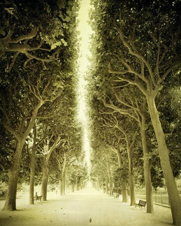 Avenue Shade II by Irene Suchocki