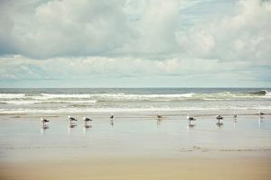 Beachcombing by Irene Suchocki