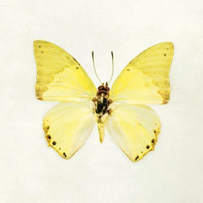 Butterfly Impression III by Irene Suchocki