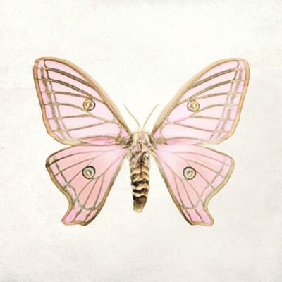 Butterfly Impression IV by Irene Suchocki