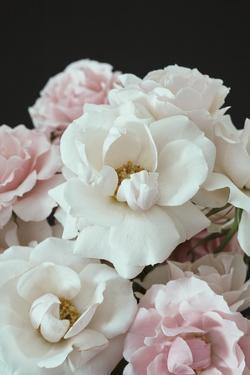 Delicate Romance by Irene Suchocki