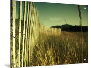 End Summer by Irene Suchocki