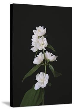 Fairytale Floral by Irene Suchocki