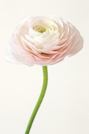 Floral Adiago by Irene Suchocki