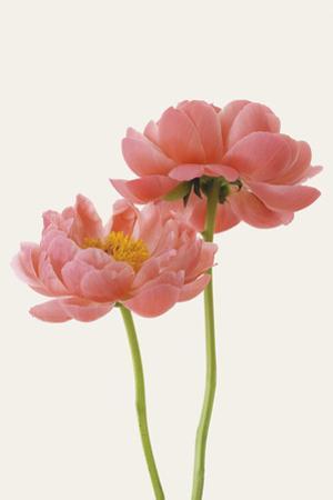 Floral Allegro by Irene Suchocki