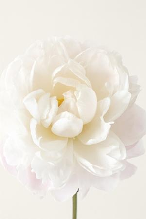 Floral Glissade by Irene Suchocki