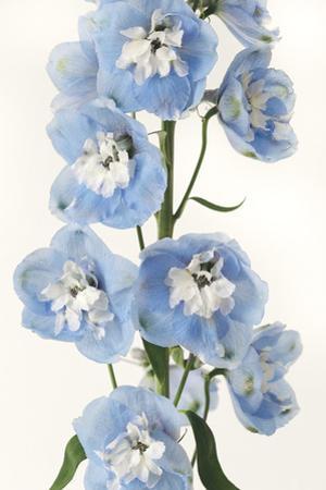 Floral Sissonne by Irene Suchocki