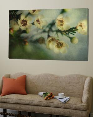 Flowers Strewn by Irene Suchocki