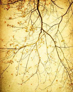 Golden Shimmer by Irene Suchocki