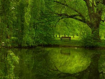 Green World by Irene Suchocki
