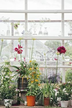 Greenhouse Glamour by Irene Suchocki