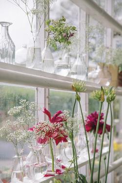 Greenhouse Grandeur by Irene Suchocki