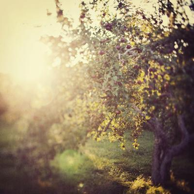 In the Orchard by Irene Suchocki